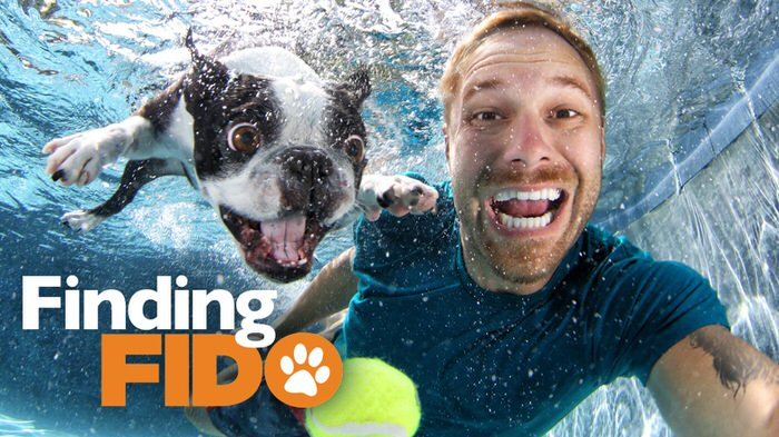 ZLiving-Finding-Fido-Dog-Matchmaking