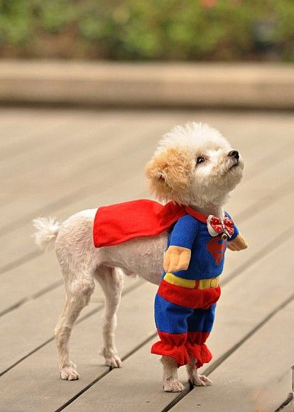 Dogs are better sUPER DOG