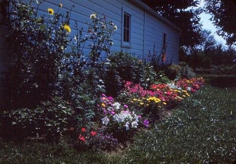 Grandma's Flower garden