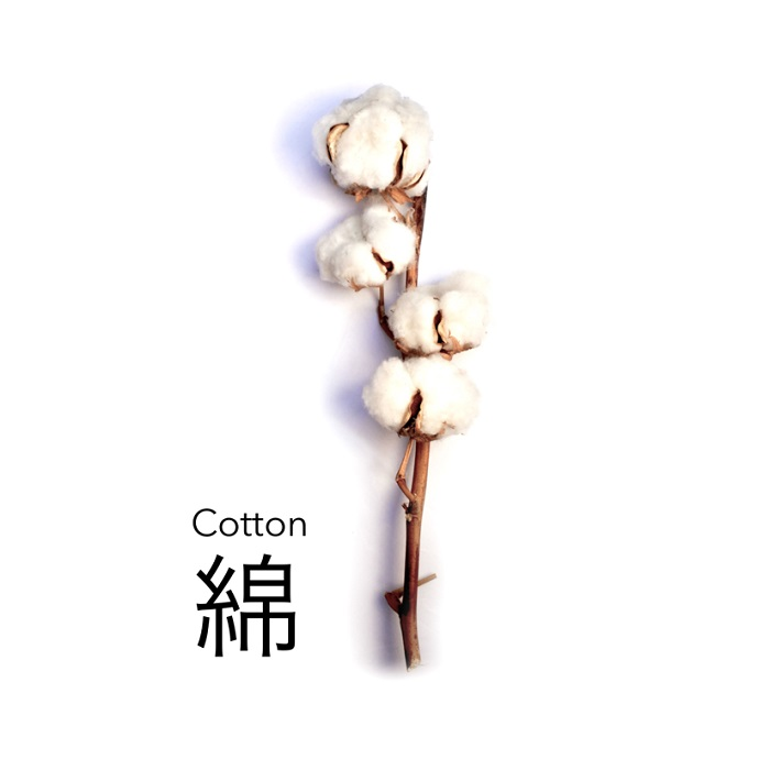 aizome Cotton